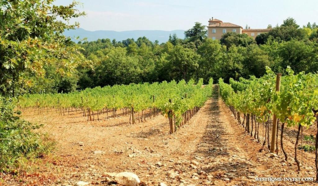 Syracuse vineyards buy