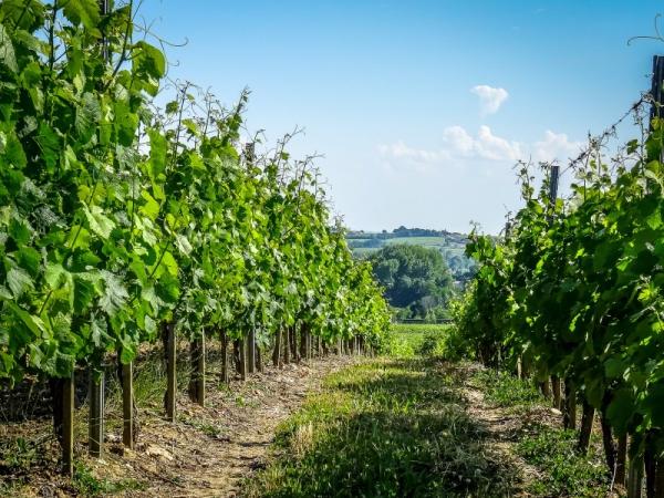 Gerace vineyards buy