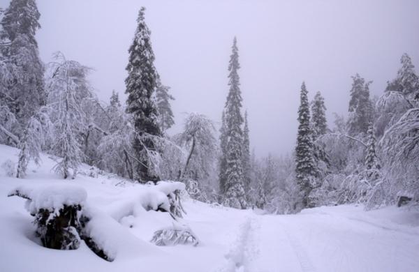 в чебоксарах: сноуборд прокат минск